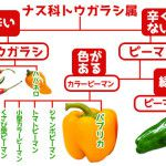 ブロッコリーとカリフラワー・・・似てるけど違う!野菜の個性◎