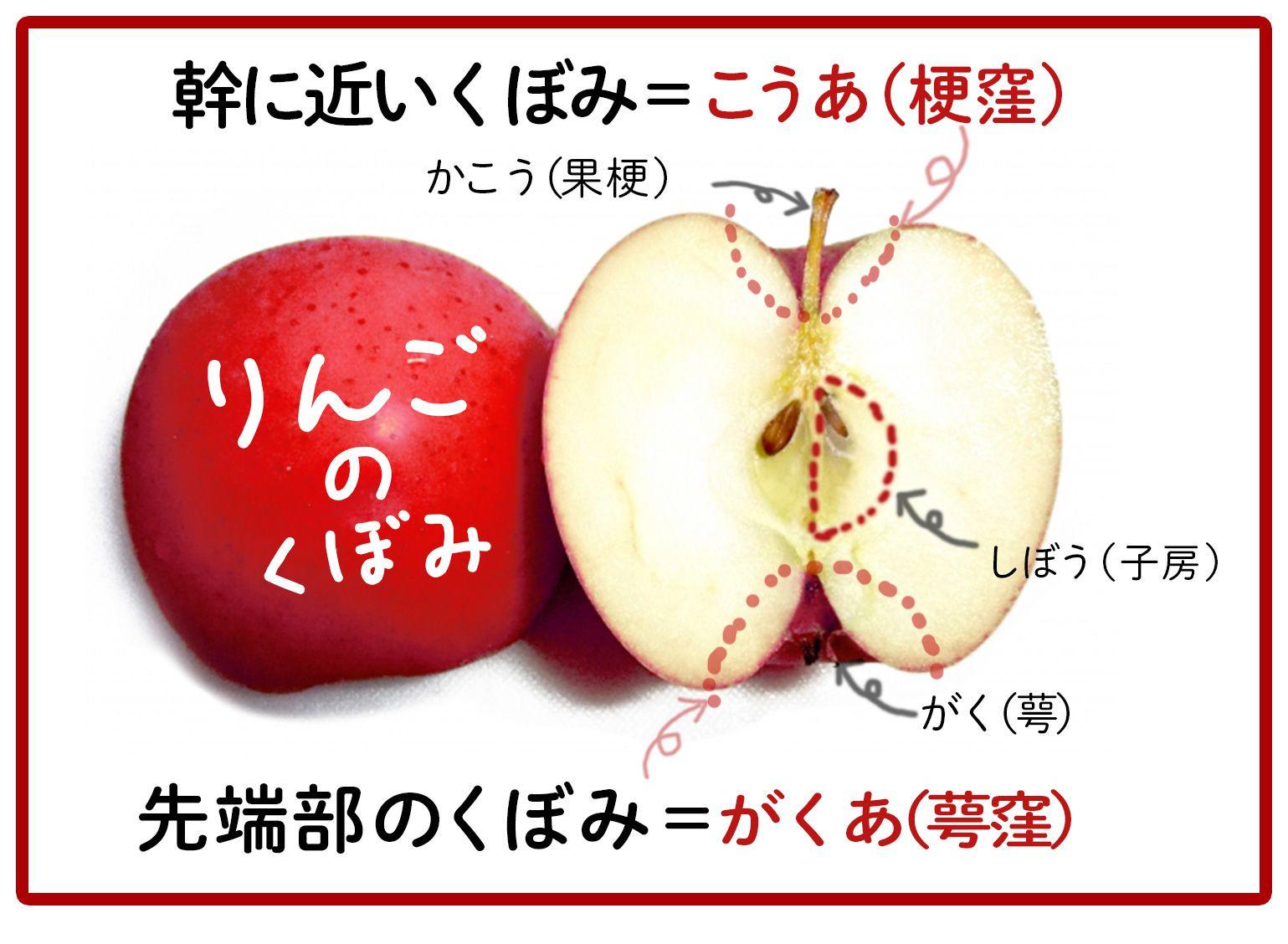 リンゴの画像 p1_19